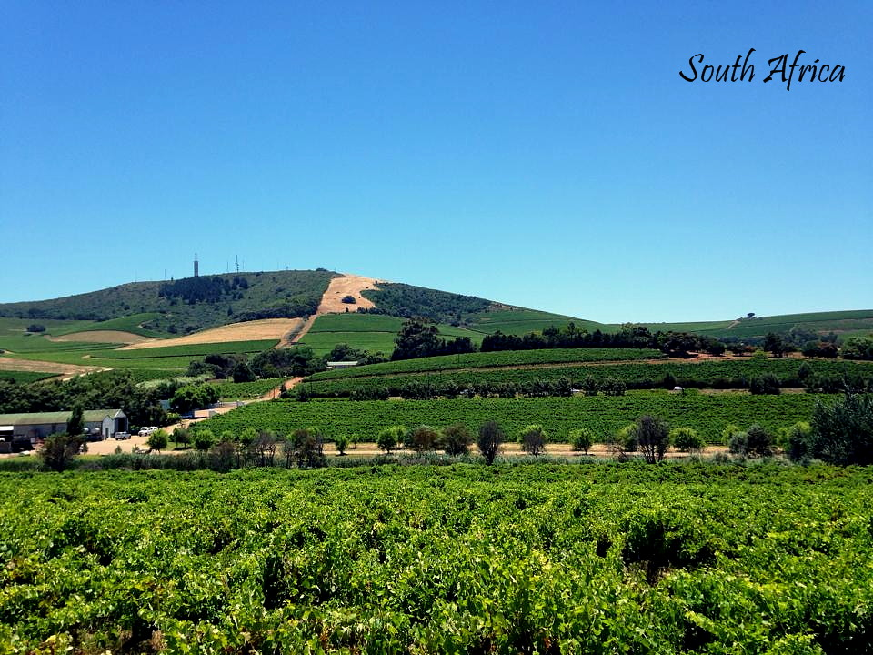 Vineyards, South Africa